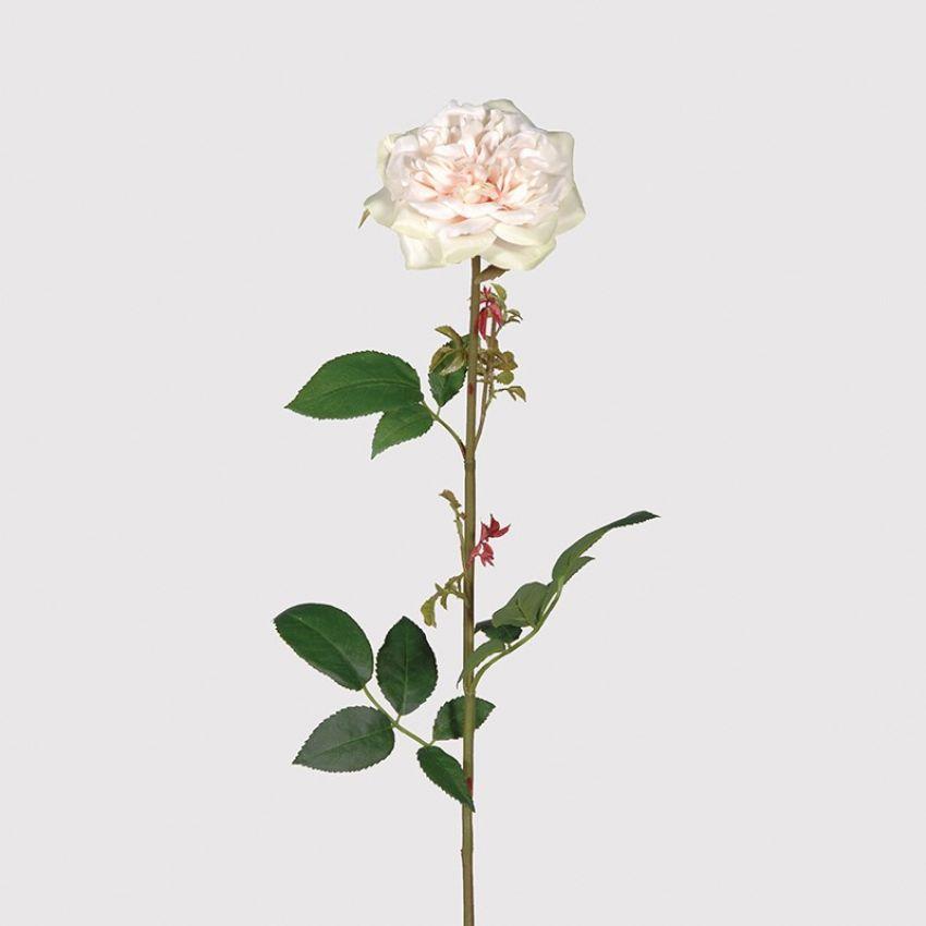 Palest Green Blush Rose Mandarin Oriental Flower