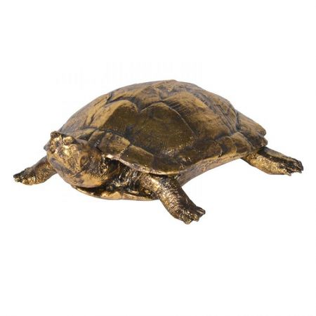 Small Golden Turtle