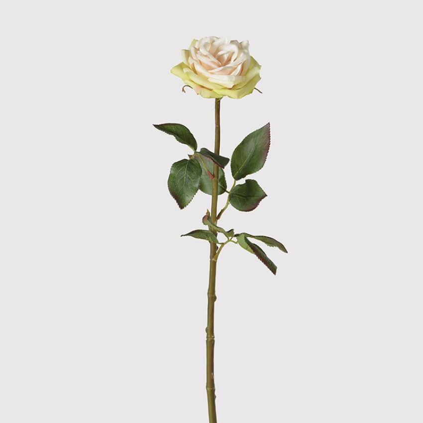 White/Peach/Lime Cotswold Rose Flower