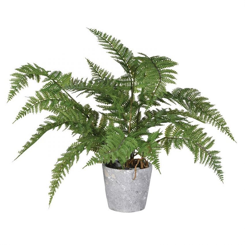 Green Fern Plant in Grey Cement Pot