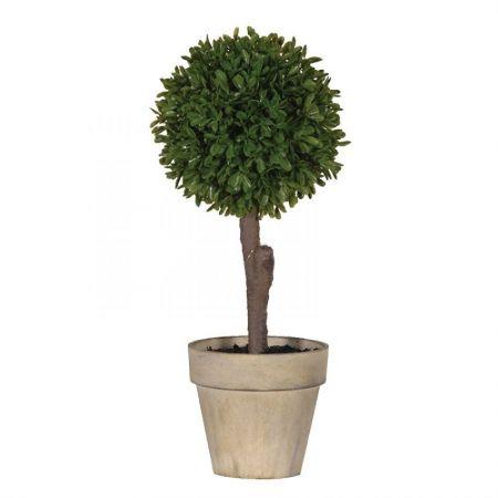 Green Miniature Boxwood Ball in Brown Pot