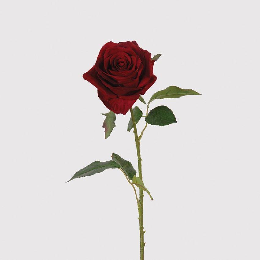 Red Rose Open Velvet Flower