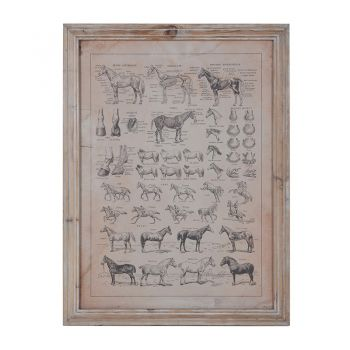 Horse Breeds Framed Print AMC013. This gorgeous framed print features your favourite horse breeds detailed in French. A stunning piece.