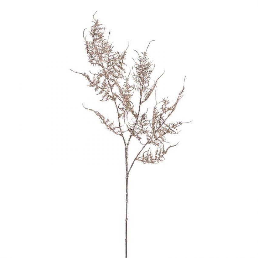 Asparagus Spray