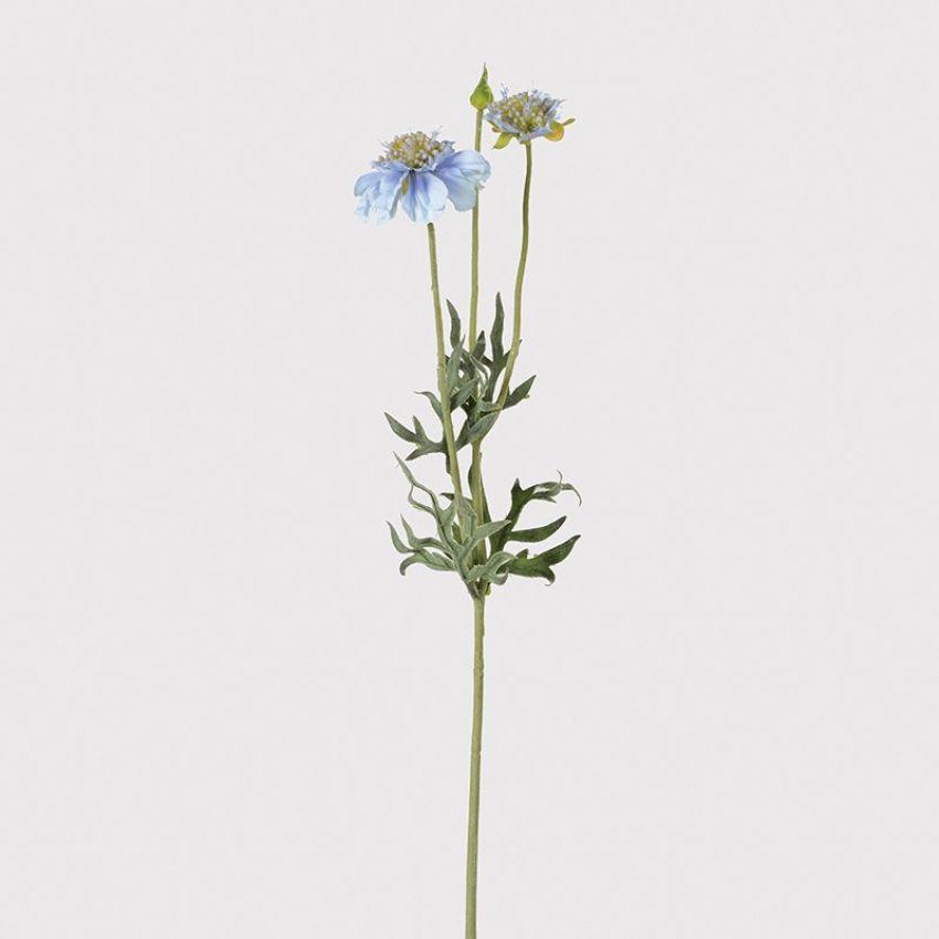 Pale Blue Scabiosa